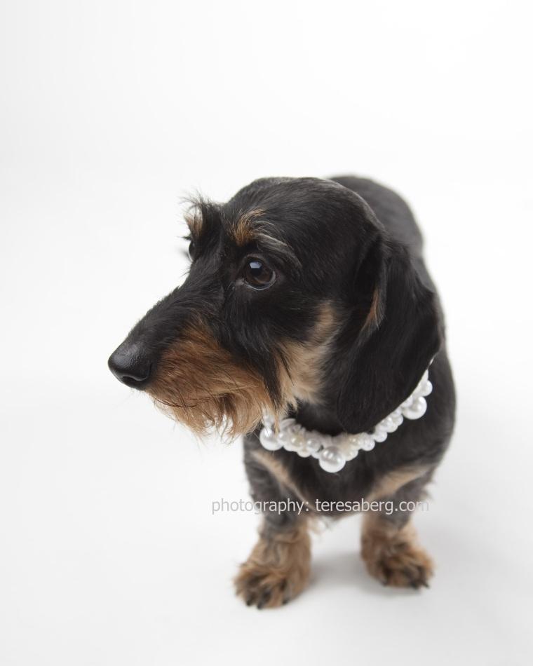 fine art pet photography rescue portrait