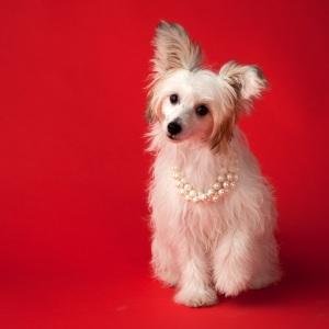 fine art dog photography Giselle