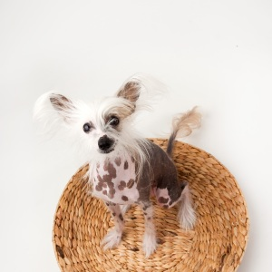 Teresa Berg Unleashed pet photography workshops