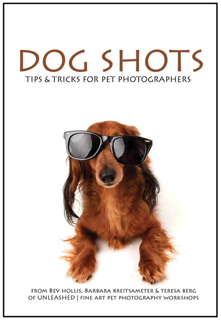 TIPS AND TRICKS FOR DOG PHOTOGRAPHERS from Unleashed Pet Photography Workshops