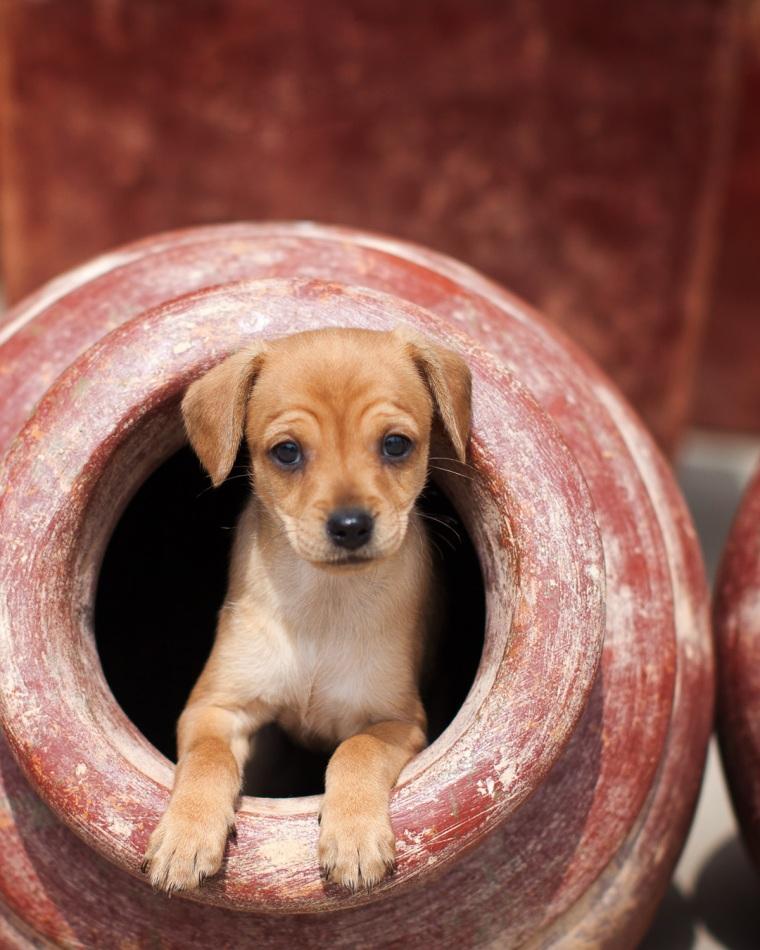 Unleashed dog photography workshop