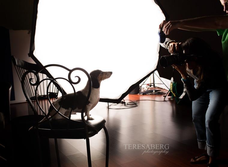 unleashed pet photography workshops