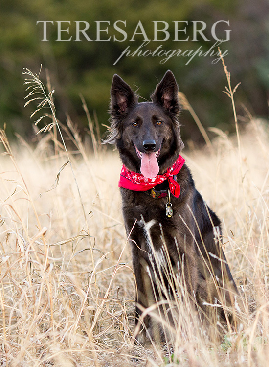 Unleashed Pet photography workshops Dallas