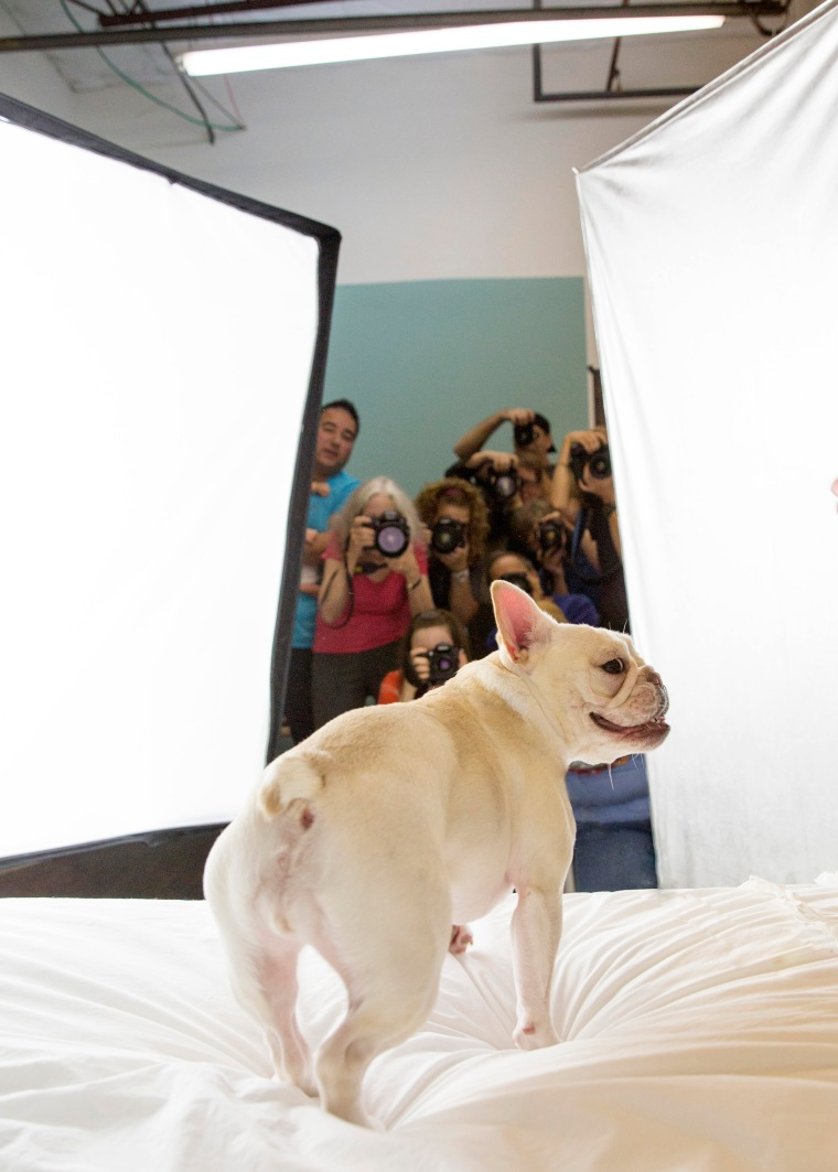Unleashed pet photography workshops