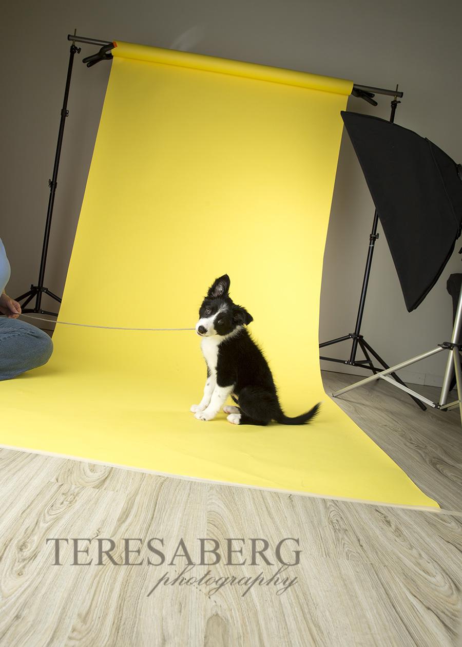 Unleashed Fine Art Pet Photography Workshops
