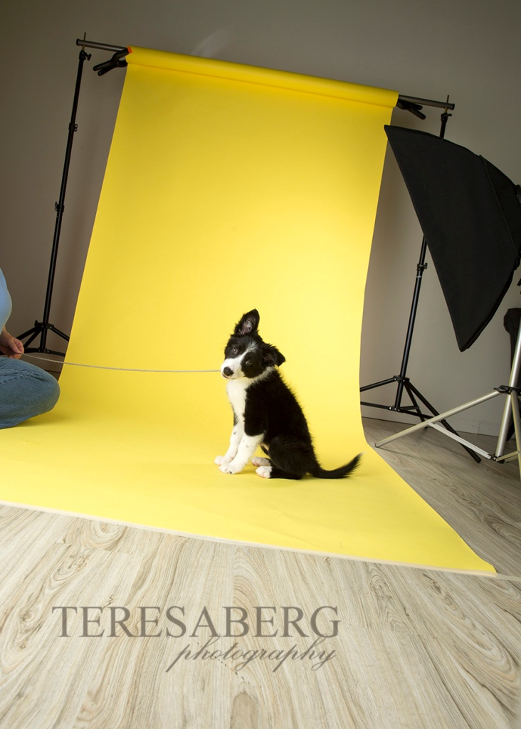 Teresa Berg pet photography workshop