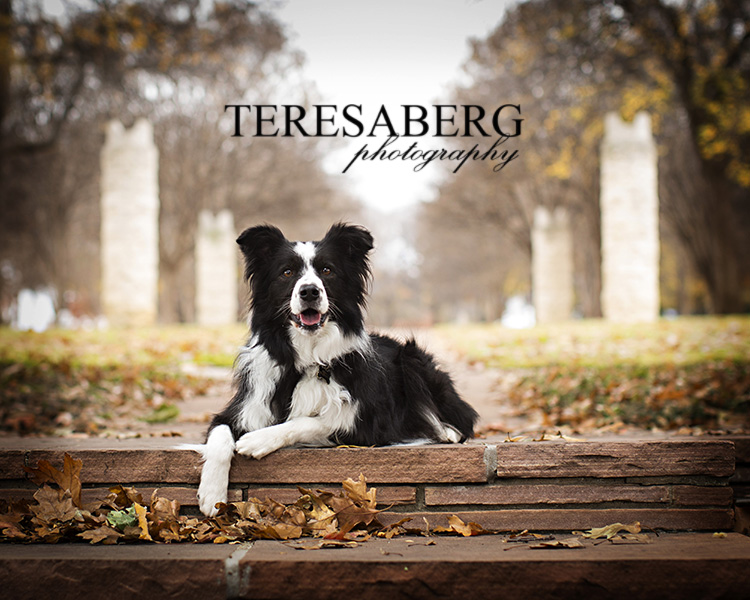 dallas dog photographer teresa berg
