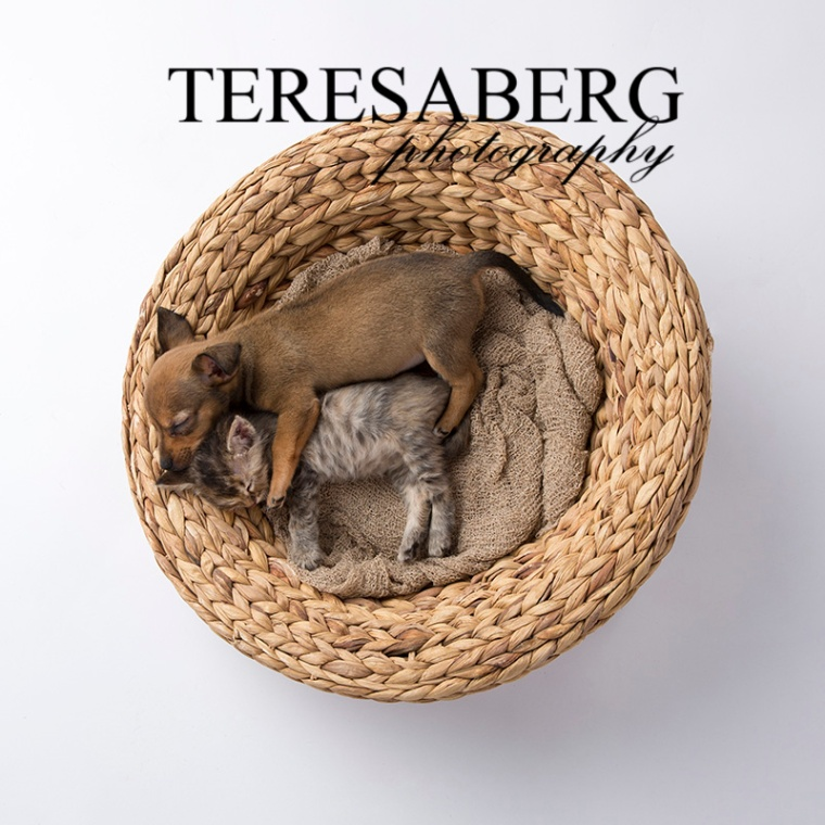 teresa berg photography