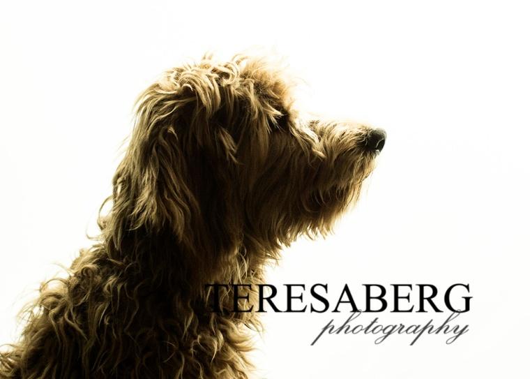 silhouette-teresa-berg